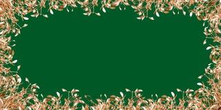 Gold mistletoe Royalty Free Stock Images
