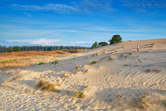 Gold morning sunlight over sand dunes Royalty Free Stock Photos