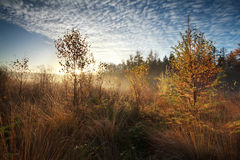 Gold morning sunshine over misty marsh with trees Royalty Free Stock Photo