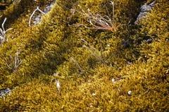 Gold moss at Pha Hin Goob Royalty Free Stock Photography