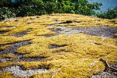 Gold moss at Pha Hin Goob Royalty Free Stock Photos