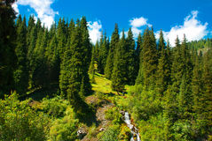 Gold Nature. Landscape, a rich golden color of natural nature. Tourists in the mountains royalty free stock image