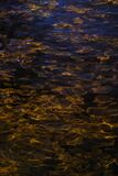 gold night water texture 2, Las Vegas Stock Photos