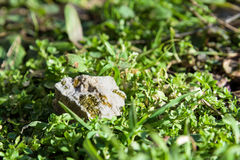 Gold nugget on grass Royalty Free Stock Photography