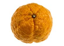 Gold Nugget Mandarin. Gold nugget is a mandarin variety, medium in size, oblate in form with a bumpy orange rind. The flesh is bright orange, finely-textured royalty free stock photography