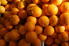 Free Gold Nugget Mandarin, Gold Nugget Tangarine Royalty Free Stock Photography - 41392337