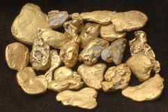Gold nuggets. Collection of small gold nuggets from Grey River Gold Dredge, West Coast, South Island, New Zealand
