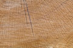 Gold Oak Section Royalty Free Stock Photos