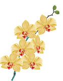 Gold orchid flower branch on white Stock Photo