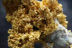 Gold ore. The natural formation of the gold ore is very precious Stock Images