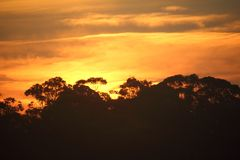Golden Sunset. Gold  over silhouetted trees Stock Photography
