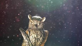Gold owl figure dust. Day light stock video footage