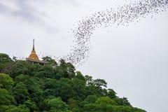 Gold pagoda with bats stream Stock Photo