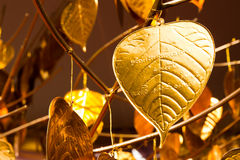 Gold PHO or Bhodi leaf stock images