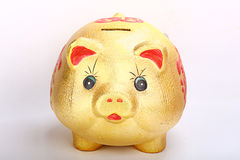 Gold pig. Money box isolated on white Royalty Free Stock Images