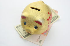 Gold Piggy Bank Stock Photos
