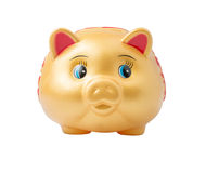 Gold Piggy Bank (Front View) isolated on white Royalty Free Stock Photography