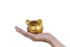 Gold piggy bank on hand women with house construction background Royalty Free Stock Photography