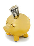 Piggy bank gold Stock Images