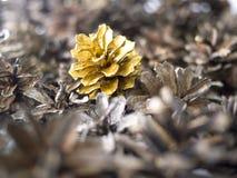Gold pine cone Stock Photos