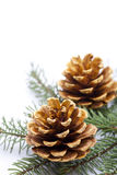 Gold pine cones Stock Images