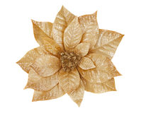 Gold Poinsettia Stock Photo