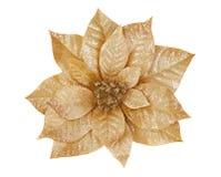 Gold Poinsettia. Isolated on white stock photo