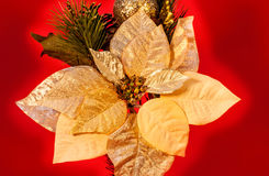 Gold Poinsettia Stock Image