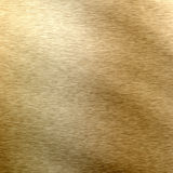 Gold polished texture Royalty Free Stock Photos