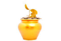 Gold pot with a young plant. Gold pot with a plant isolated on a white background Stock Images