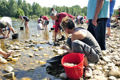 Gold prospectors of all ages on the banks of the Gardon River Royalty Free Stock Photography