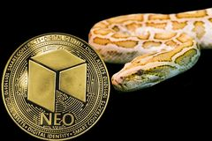 Gold Python and coin cryptocurrency Neo. Concept yellow snake and coin cryptocurrency Neo stock image