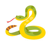 Gold python reticulated albino boa constrictor wildlife nature snake vector illustration. Stock Photo