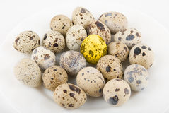 Gold quail egg Stock Photos