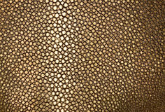 Gold ray leather Royalty Free Stock Photography