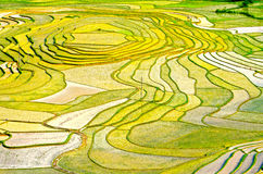 Gold rice terraces of Baping. Guangxi, China Royalty Free Stock Photography