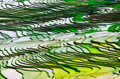 Gold rice terraces of Baping. Guangxi, China Stock Photography
