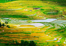 Gold rice terraces of Baping. Guangxi, China Royalty Free Stock Photos