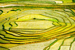 Gold rice terraces of Baping. Guangxi, China Royalty Free Stock Photo