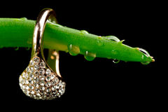 Gold Ring on Aloe Vera Leaf with Water Drops Stock Images