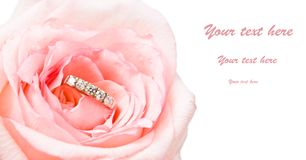 Gold ring in beautiful rose. On white Royalty Free Stock Photos
