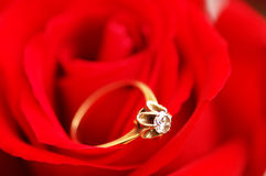 Gold ring with diamond. On red rose Royalty Free Stock Image