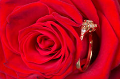 Gold ring with diamonds hidden in rose petals. Royalty Free Stock Photography