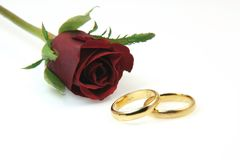 Gold rings and rose Royalty Free Stock Image