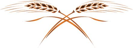 Gold ripe wheat ears; frame, corner or border design element, lo. Gold ripe wheat ears, . Can be used as frame, corner or border design element, logo template Stock Photos