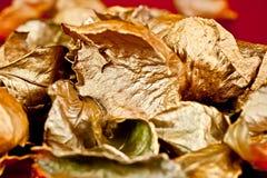 Gold Rose. Stock Photos