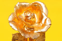 Gold Rose Royalty Free Stock Images