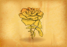 Gold rose Stock Images