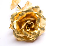 Gold roses Royalty Free Stock Photos