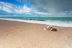 Gold sand beach on Atlantic ocean coast Stock Photos